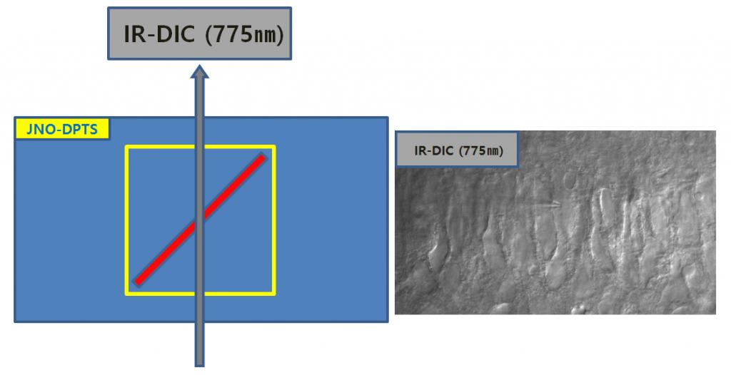 One Way((IR-DIC 775nm)